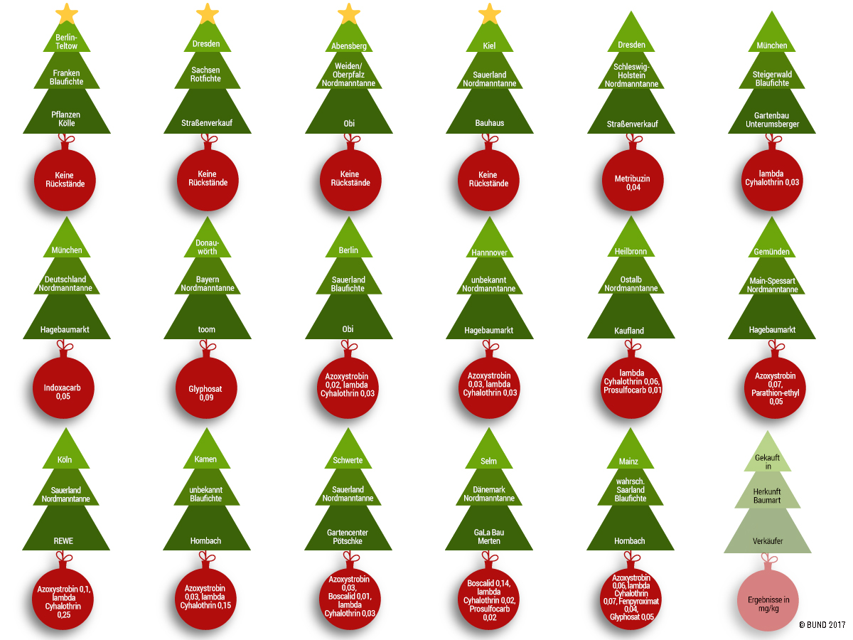 Weihnachtsbaum Kaufen Kiel.O Tannenbaum O Tannenbaum Wie Giftig Sind Deine Blätter
